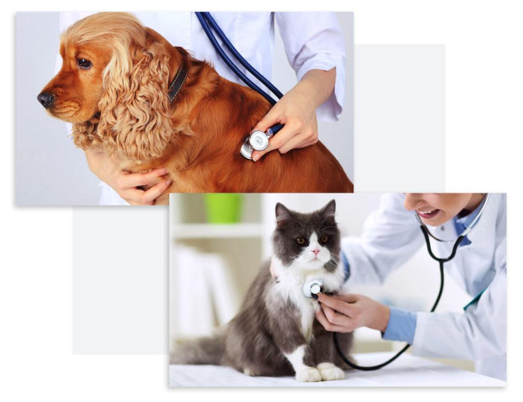 Ветеринарное сопровождение хвостатые гости краснодар